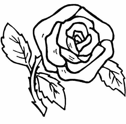 rose avec des épines