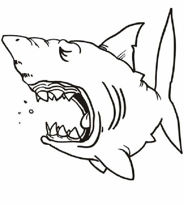 requins à colorier à la maison