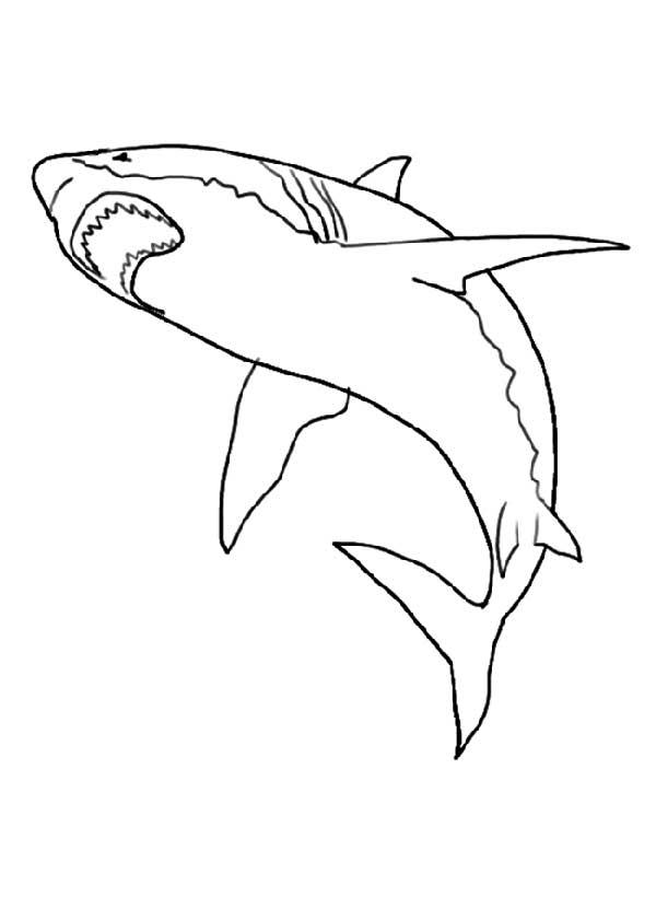 requin à peindre