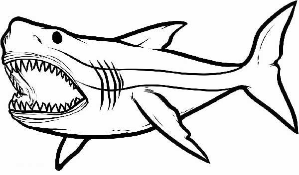 coloration de requin