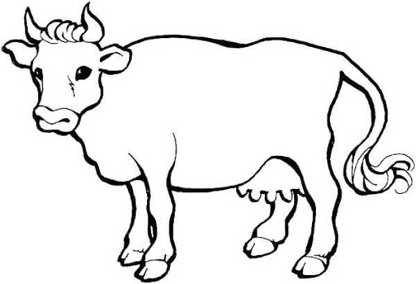 coloration de vache