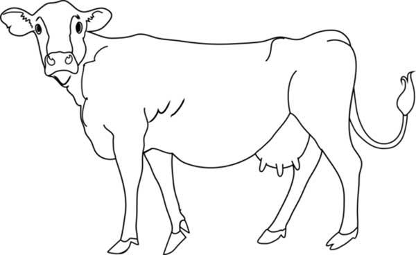 vaches à colorier