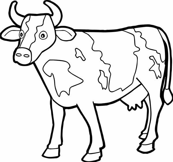 vache de boucherie