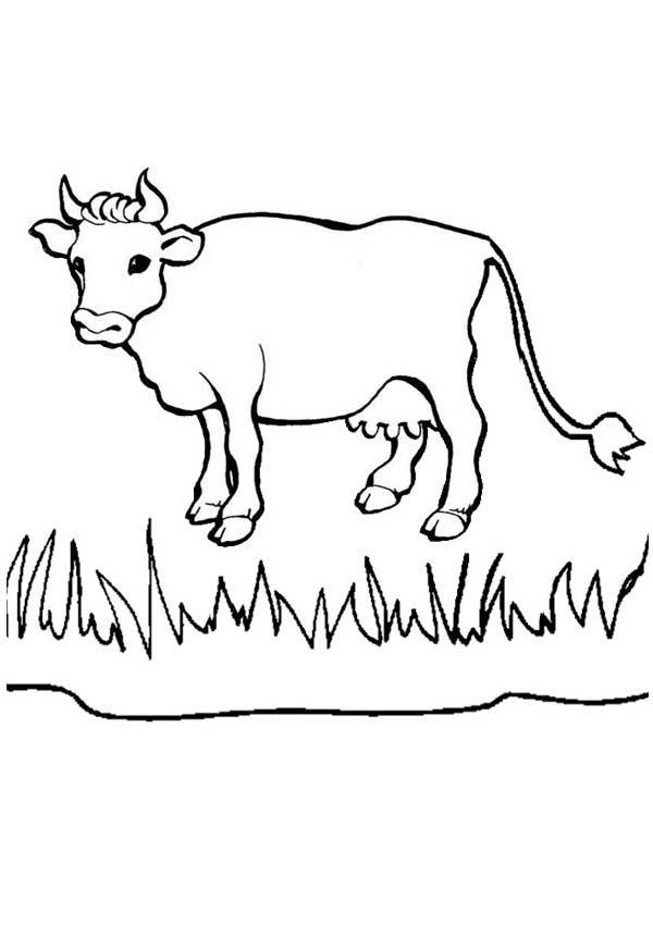 vache à peindre