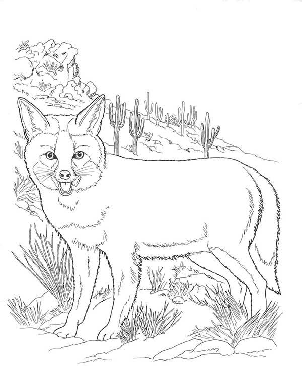 coloration de renard