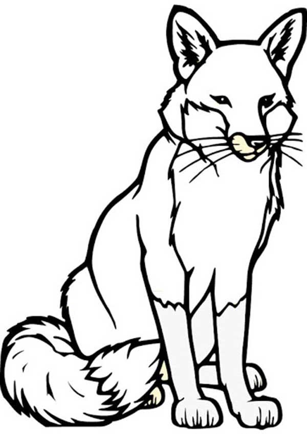 dessins de renard