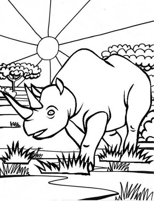 Dessins De Rhino