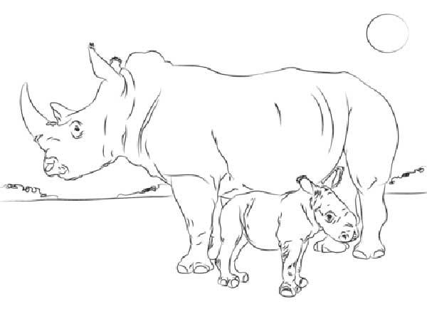 Rhino à peindre