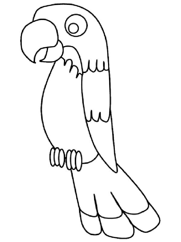 dessins de perroquet