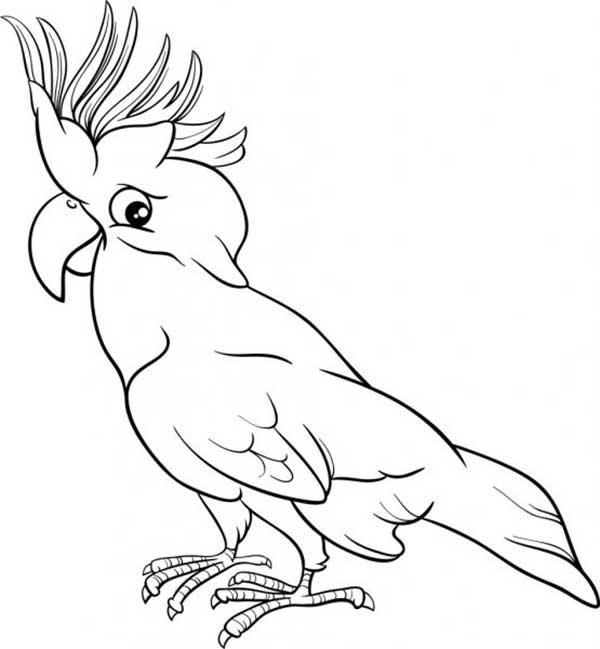 perroquet à imprimer