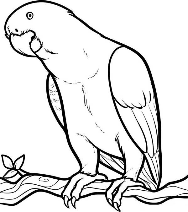 perroquet à colorier