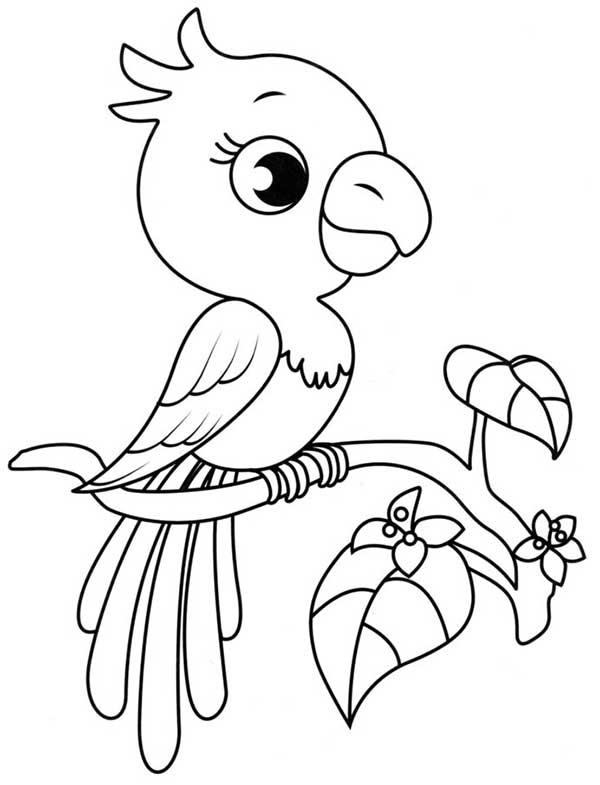 poussin d'oiseau